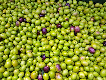 Olive - For hair strength